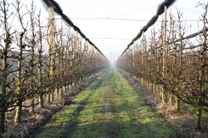 Vineyards, Tenuta La Pila